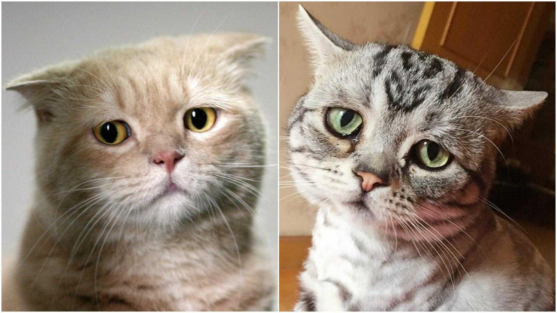 У вашей кошки может быть депрессия! как распознать и что делать? — 4 лапки