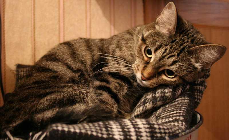 Как вылечить депрессию у кошки