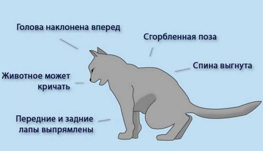 Депрессия у кошек - животные - 2020
